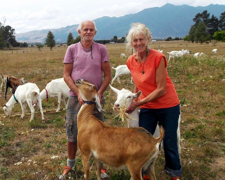 Jeanne and John van Kuyk have a certified organic goat farm near Te Aroha, and make goat milk cheese.