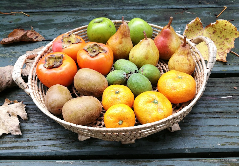 Winter fruit basket