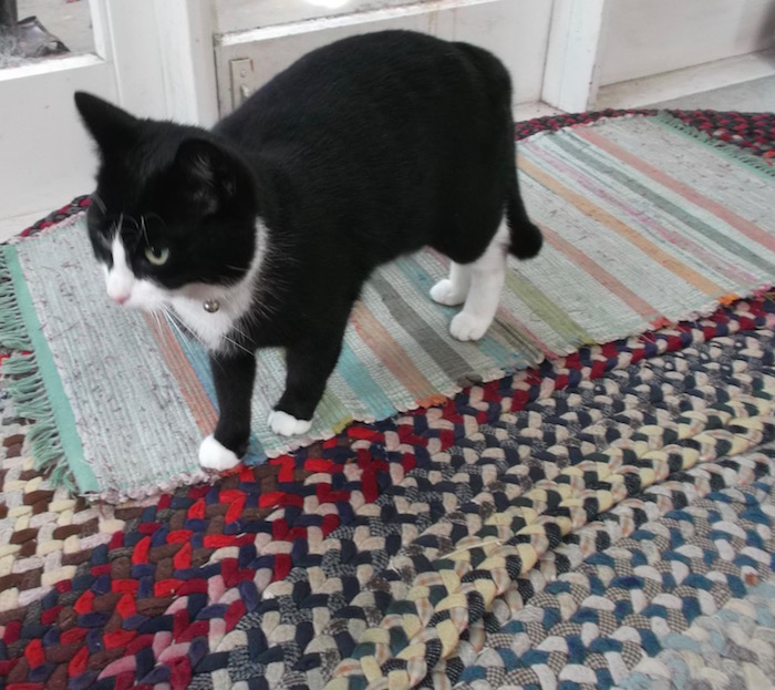 New cat, old rug. Wallace wonders where the cat door is.
